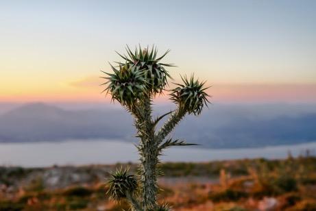cactus douleurs